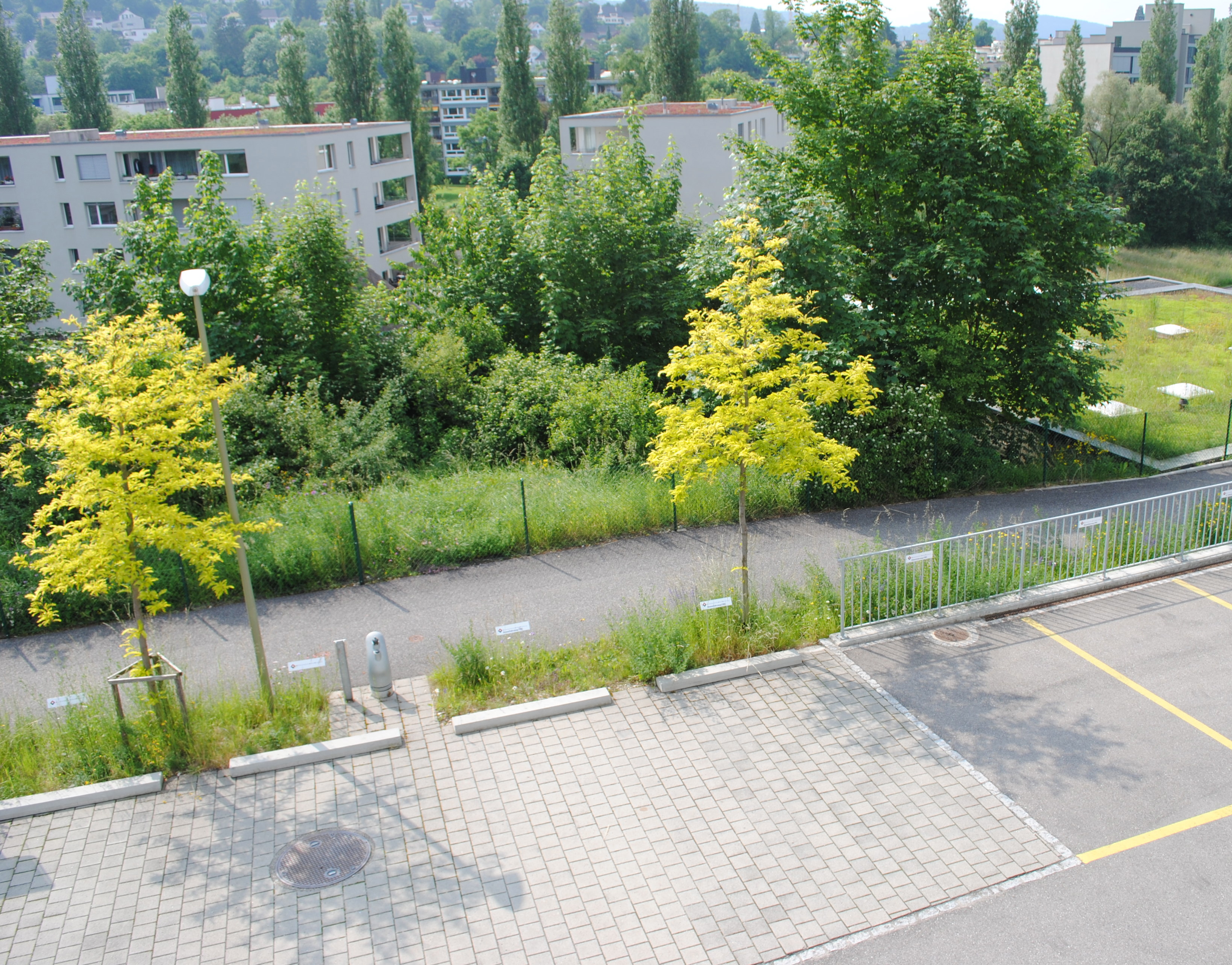 8 Shades Of Green Infrastructure Spur
