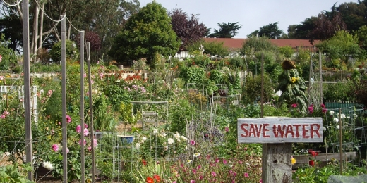 Fort Mason Community Garden. Photo courtesy of Flickr user greychr